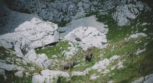 3. male avnature_triglav
